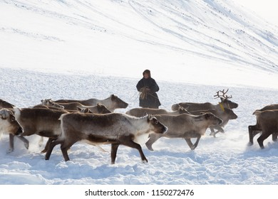 RUSSIA, YAMAL - MARCH 16, 2018: Reindeer herders catching deer