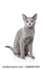 Russian blue cat with green eyes (isolated on white)