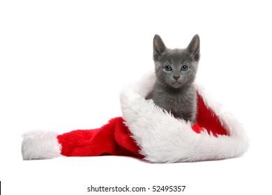 Russian Blue kitten in Christmas hat