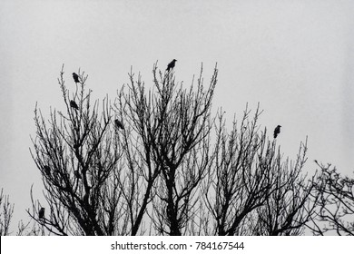 Russian crows watch the order