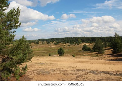 Russian nature. Pines grow on the sand