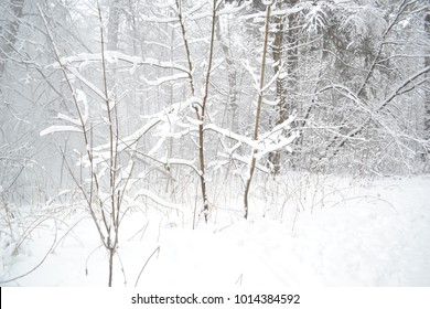 Russian northern nature: winter forest covered by snow