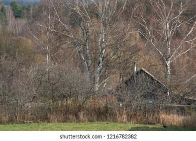 Russian rural LANDSCAPE