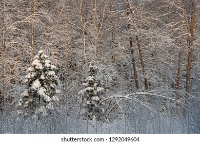 The Russian snow winter - the wood