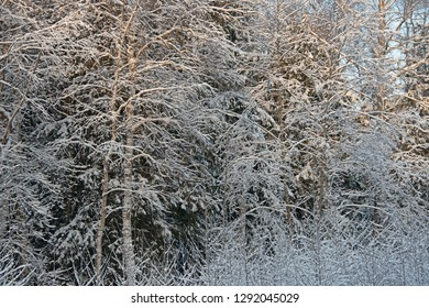 The Russian snow winter - the wood landscape