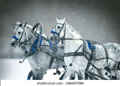 Russian troika horses in winter