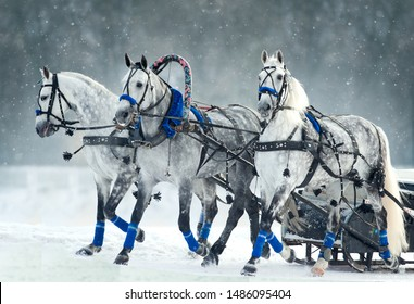 russian troika running in winter