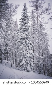 Russian winter forest and trees under a lot of snow with  path