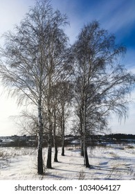 Russian winter nature, fields, forests and blue sky