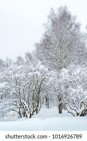 Russian winter, snow covered trees day cloudiness
