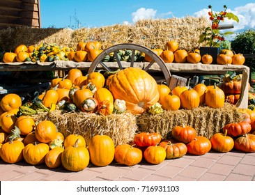 A rustic autumn still life with organic pumpkins in the hay.