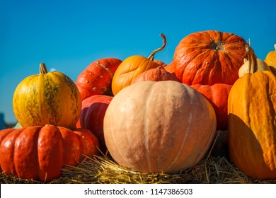 A rustic autumn still life with pumpkins , large different pumpkins, Different varieties of pumpkins, a wooden cart with pumpkins