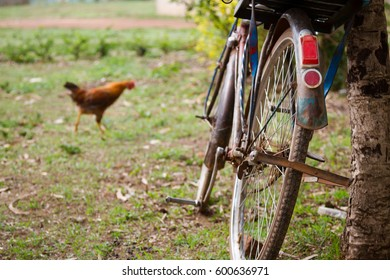 Rustic bicycle leaning against a tree in rural Kenya