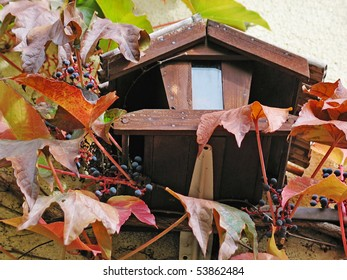 Rustic birdhouse among colored ivy leaves