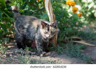 Rustic cat on a background of bushes with flowers.