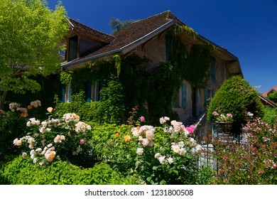 Rustic cottage with roses outside Menthon  Saint  Bernard Lake Annecy France