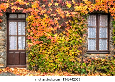 Rustic facade of an French house covered by autumn colored vine leaves.