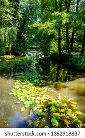 Rustic landscape. Park with water and trees. On the water are waterlily leaves and the reflection of trees.  Good for meditation and relaxation.