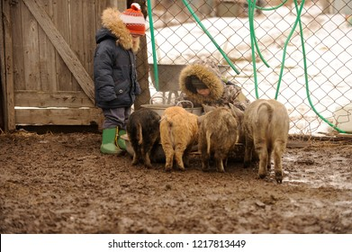Rustic Little boys helps his father to feed the pigs on the farm. pan for cooking porridge, wheelbarrow for the transport of food for pigs. Winter weather with rain and snow