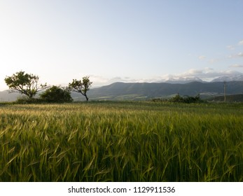 rustic nature landscape at sunset