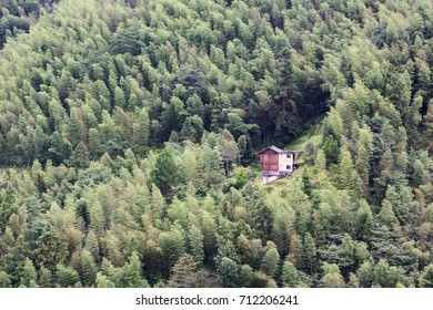Rustic old house surrounded by forest.