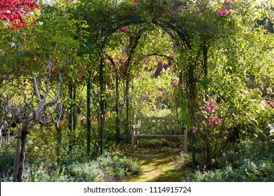 Rustic old wooden garden bench covered in lichen beneath rose arbor in sunlit garden setting
