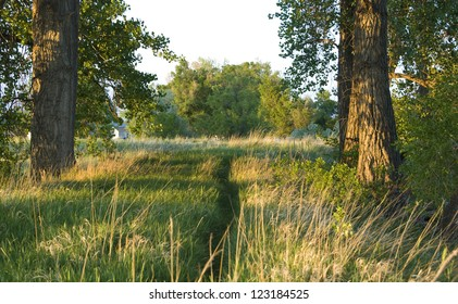 Rustic path meanders forward between cottonwood trees towards a grassy field