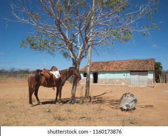 Rustic scenery of the Northeast of Brazil. The beauty of what is authentic.