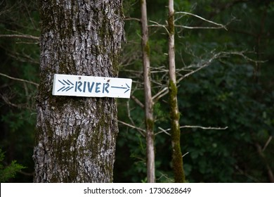 A rustic sign on a tree in the forest
