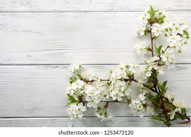 Rustic spring background with  branch