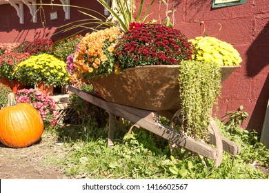 Rustic still life with flowers, wheelbarrow, pumpkins and plants