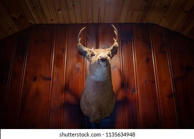 Rustic stuffed taxidermy deer head wall decoration
