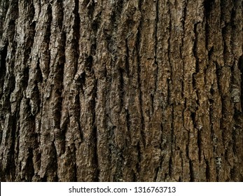 Rustic tree bark texture