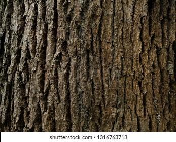 Rustic tree bark texture
