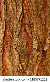 Rustic tree trunk