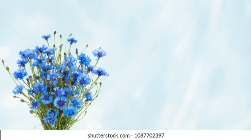 Rustic Wide Angle blue background with bouquet Blue Cornflower. Beautiful Nature Summer Flowers background or Web banner with copy space. Template for Greeting card for mother's day, birthday