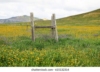 Rustic wooden and barbed wire fence surrounded by multicolored wildflowers during early spring at Carrizo Plains National Monument, California