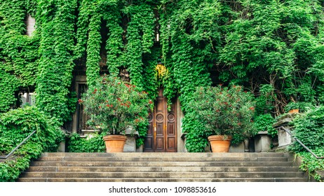 Rustic wooden door entrance to an Italian villa in Milan covered in beautiful green leaves in the Springtime.