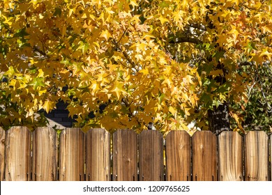 Rustic wooden fence background with yellow fall trees.