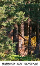 rustic wooden house in a deep forest in British Columbia. Selective focus, travel photo.