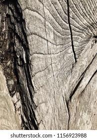 Rustic wooden texture.