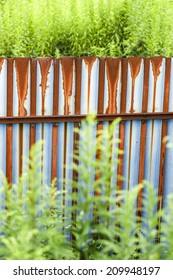 the rusting fence in the green - concepts of beauty