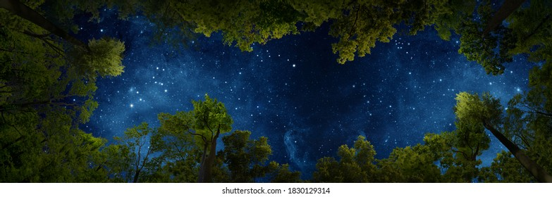 The rustle of the forest and the dance of the stars in a quiet night.