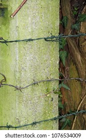 a rusty barbed wire