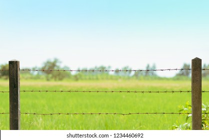 Rusty barbed wire fence with blurry green field in backdrop. Copy space on top area.