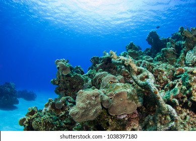 A rusty chain has been left abandoned on a tropical coral reef. The metal  has