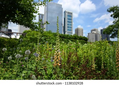 Rusty foxglove flowers stand tall in the Lurie Gardens with the Chicago Skyline in the background.