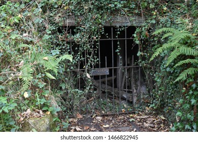 Rusty gate hidden in undergrowth with ferns and leaves. Spooky and a feeling of being unsafe.