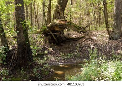 Rusty log is a grove
