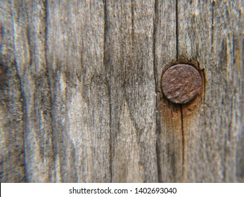 Rusty nail in the wooden wall of the house. Grey and brown rusty background. Nail had been hammered into wooden log.